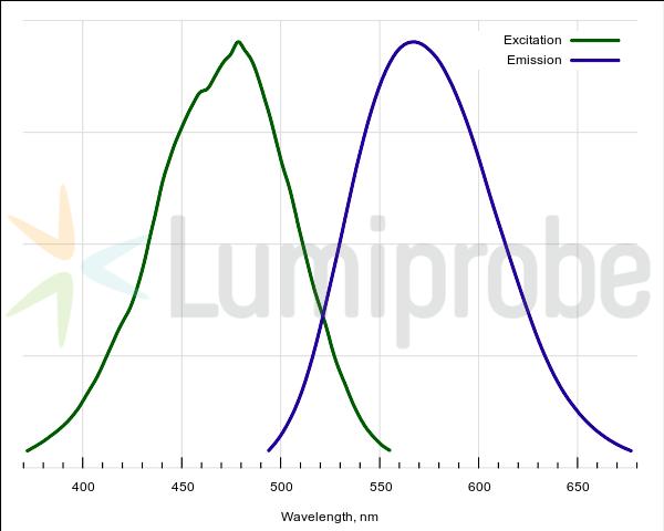 Absorptions- und Emissionsspektren von ProteOrange komplexiert mit Protein
